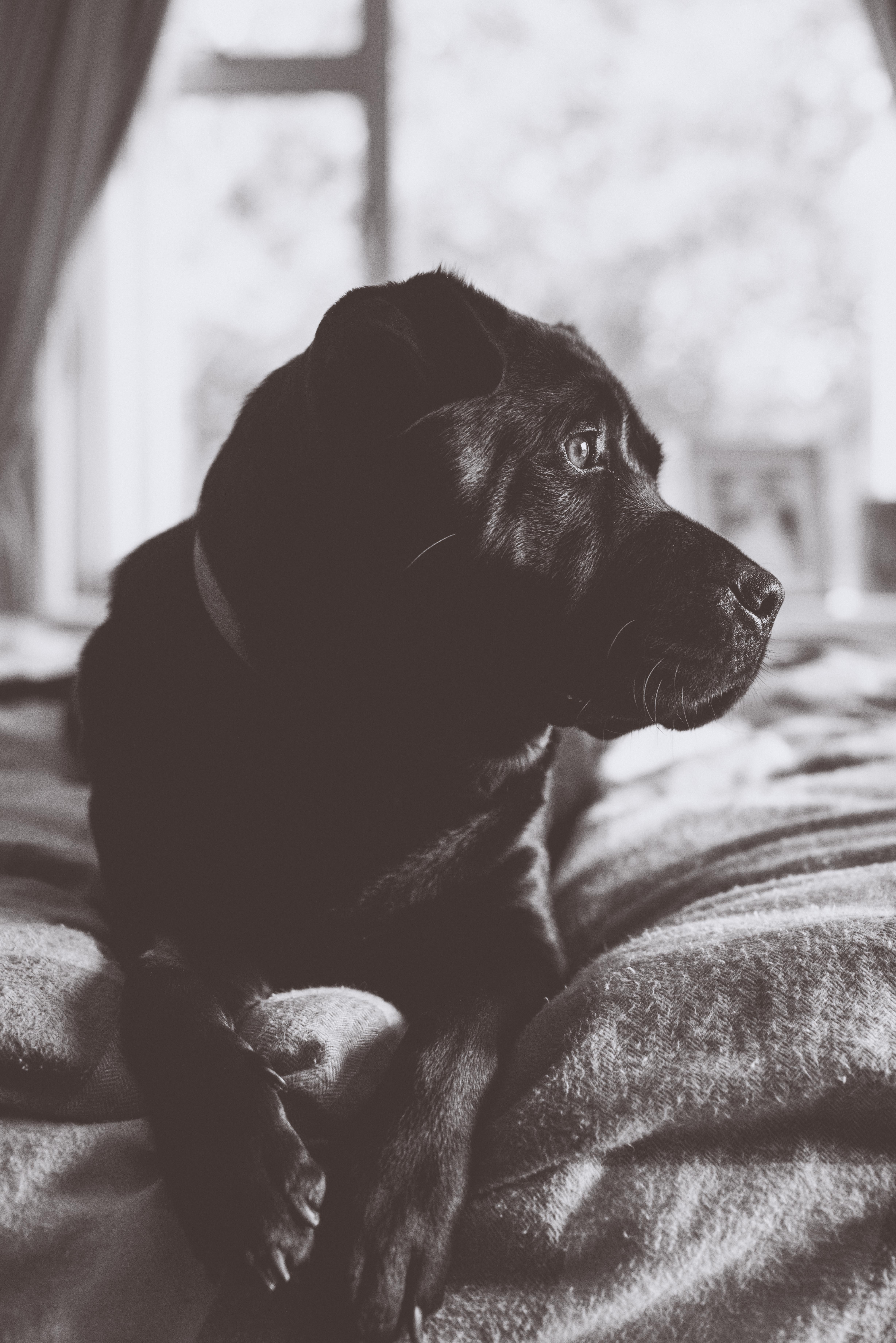 Stunning pup portrait
