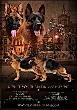Poster by vojinstudio KENNEL VON TURIA D