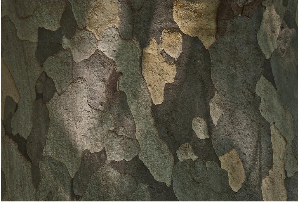 PLANE TREE BARK PATTERN_THE CHIMP