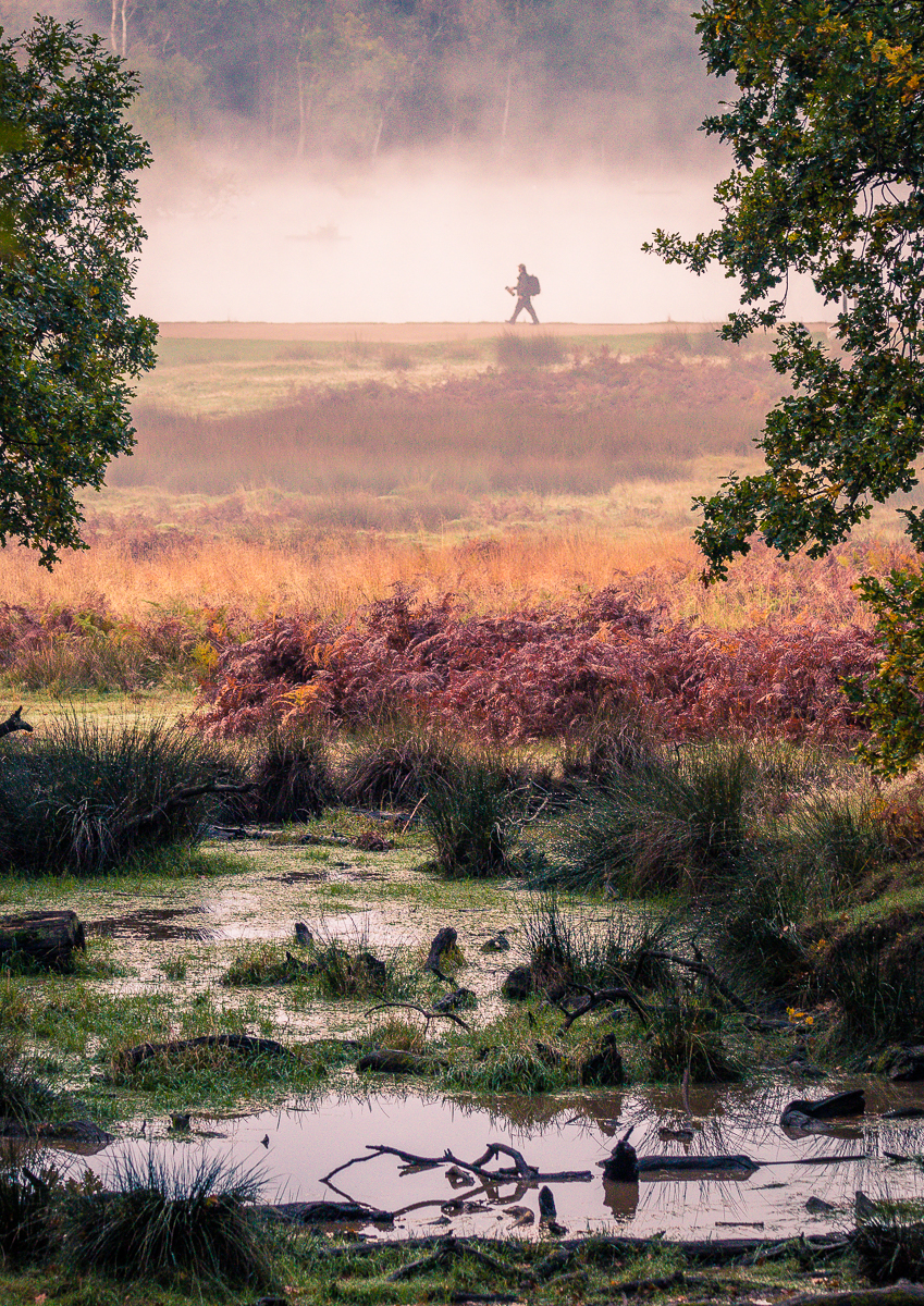 A MISTY MORNING IN RICHMOND PARK