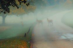A MISTY MORNING IN RICHMOND PARK