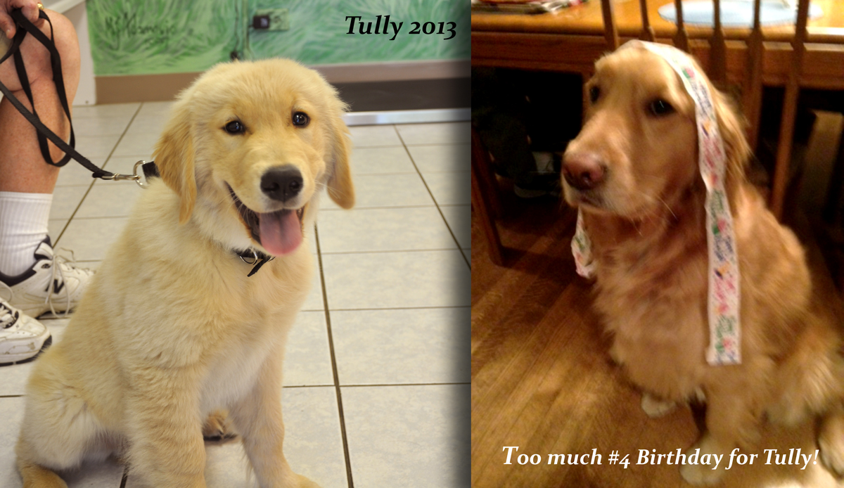 Tully 2013 and 2017