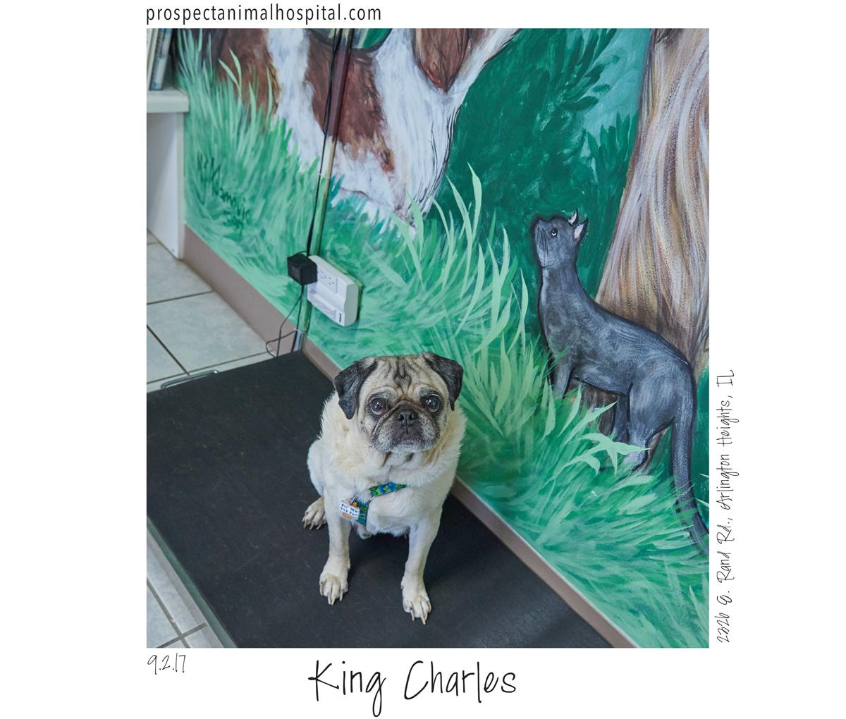 King-Charles-v1King Charles