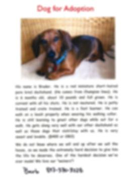 Dog for Adoption - Prospect Animal Hospital
