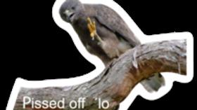 Pissed Off ʻIo Sticker