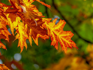 The Changes Autumn Brings