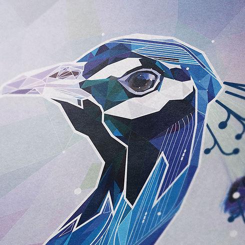 peacock02.jpg