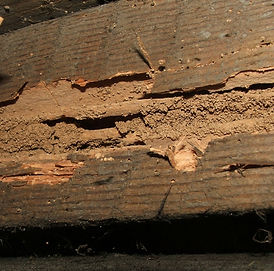 Evidence of dampwood termites found in a framing board. Notice the clumpy pellets they leave behind.