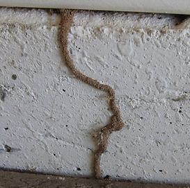 Subterannean termite tubes can be hidden in your house. You may notice swarmers gaining entry.