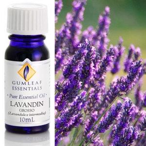 Lavender Blended