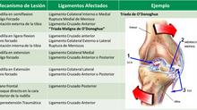 La Rodilla Parte II. Lesiones Ligamentarias