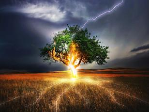 LUNA LLENA en TAURO: ser árboles en un mundo convulso