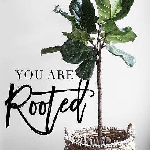 Rooted plant.jpeg