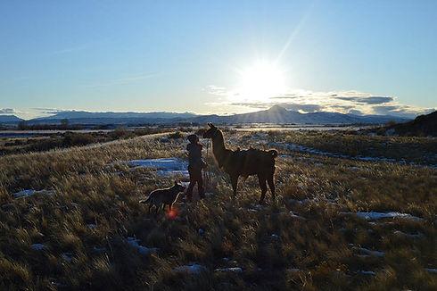 about-llama-first.JPG