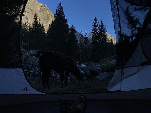 thumb-guide-treks-overnight-luce-and-hog
