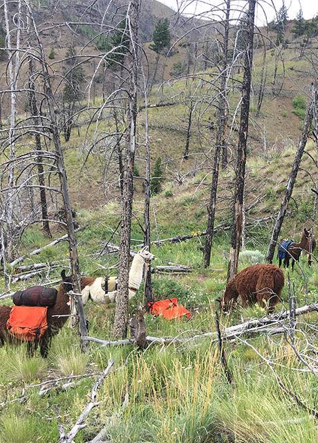 yellowstone backcountry