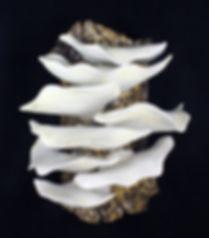 Lynnette Hesser, Creamy Tree Fungi, whit
