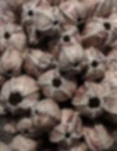 Barnacles Detail.jpg