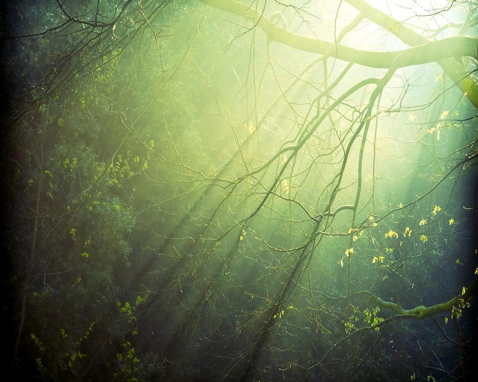 light-through-tree.jpg