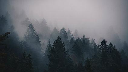 fog-2560x1440-5k-4k-wallpaper-trees-fore