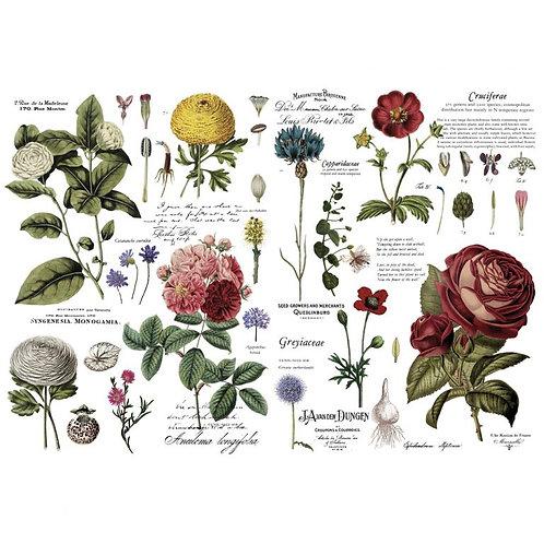 Decor Transfer-Vintage Botanical