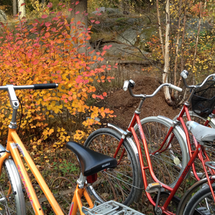 autumn colored bicycles