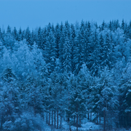 winter twilight over trees