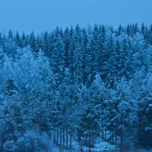 winter twilight over trees