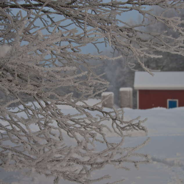 red barn past branch with hoar frost