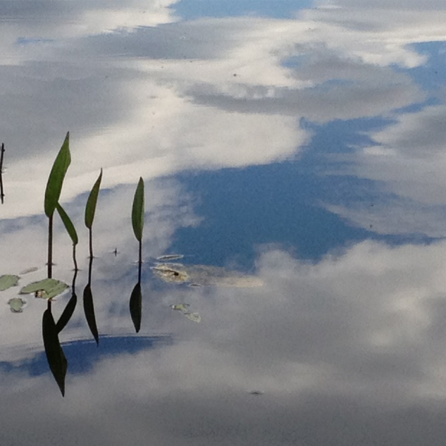 reflection of clouds in pond