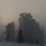 hoar frost light