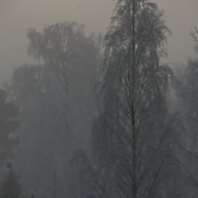 trees in fog with hoar frost