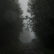 treelinned road in fog