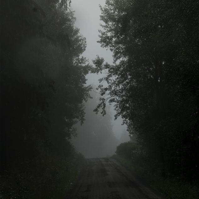 treelinned road in fog