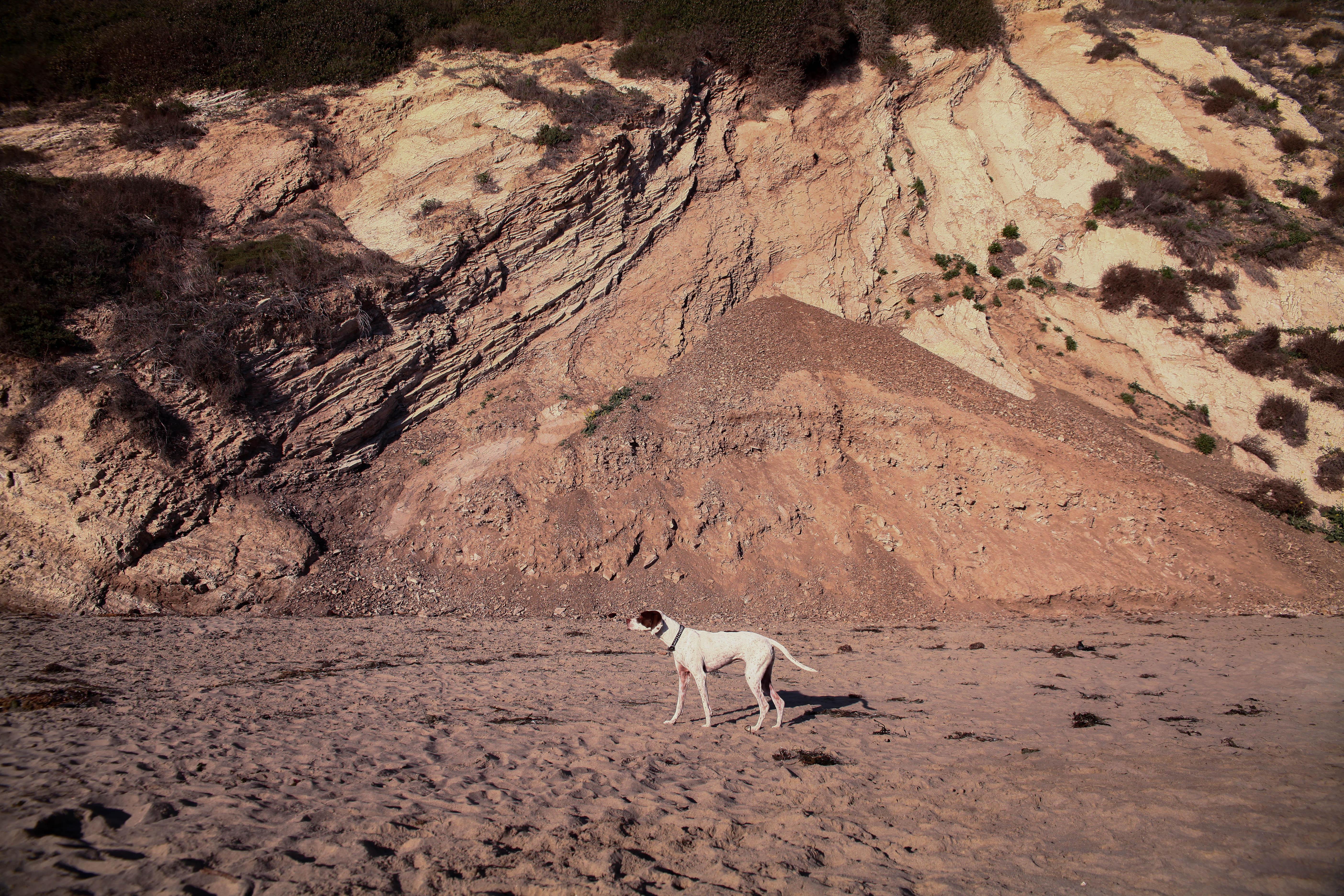 dog+beach+pointer-1.jpg
