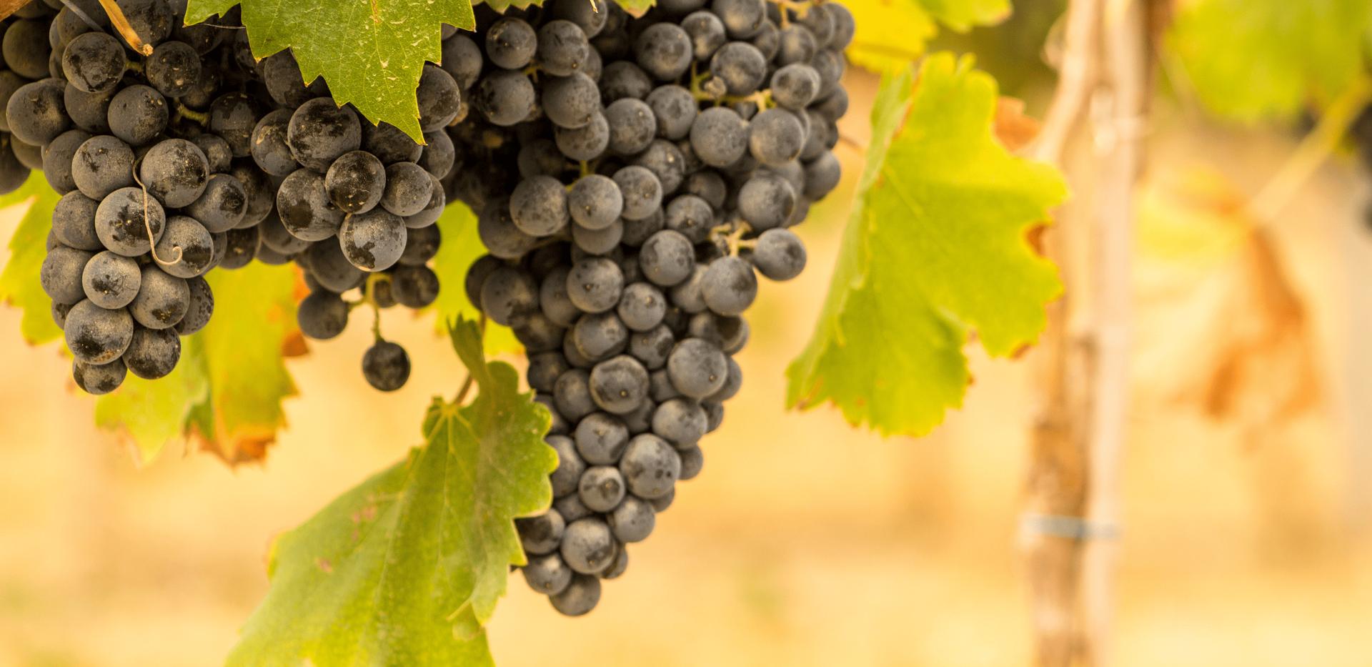 Etel Winery 1-min.png
