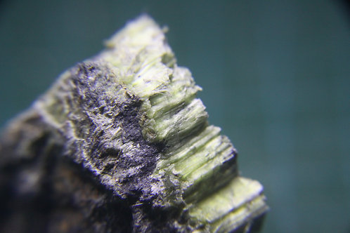 Chrysotile sur serpentine