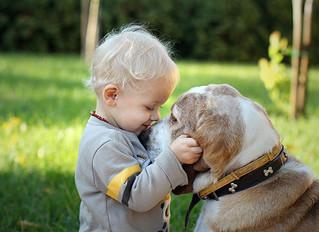 """La """"forza"""" spirituale nel cane nelle Costellazioni Sistemico Familiari per gli Anima-li"""