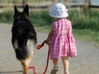 Le Costellazioni Sistemico Famigliari per gli Anima-li :il Processo di trasformazione del cane e del