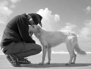 Accompagnare empaticamente un animale alla fine della sua vita è la stessa cosa che fargli l'eutanas