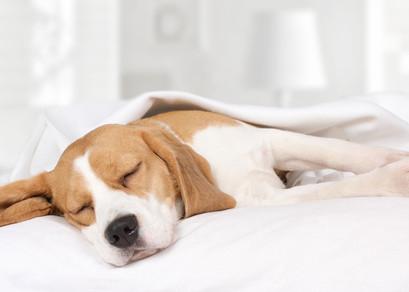 A Good Night's Sleep Helps You Learn!