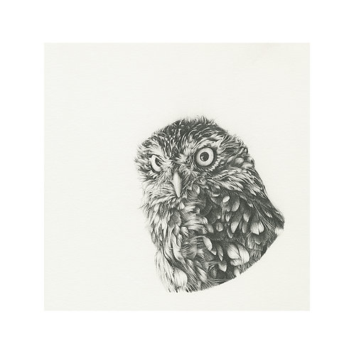 Little Brown Owl (graphite)