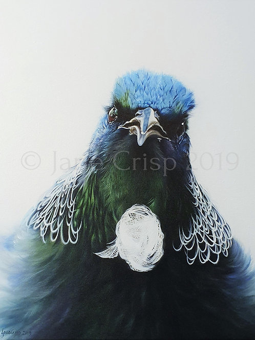 The Talkative Tui  - SOLD