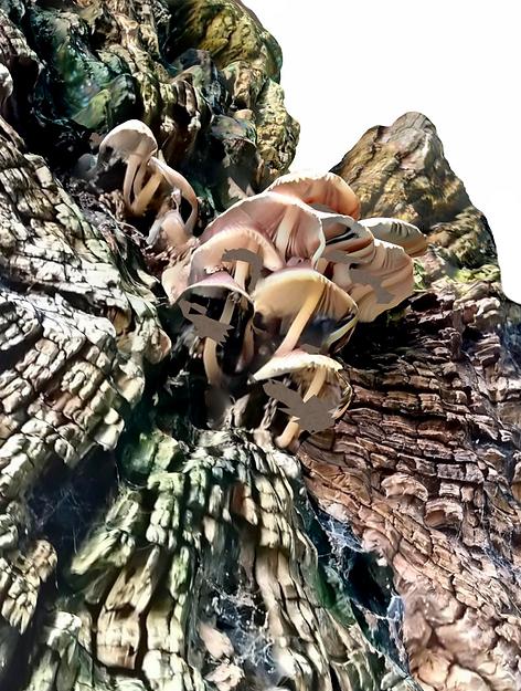 edit mushroom000.PNG