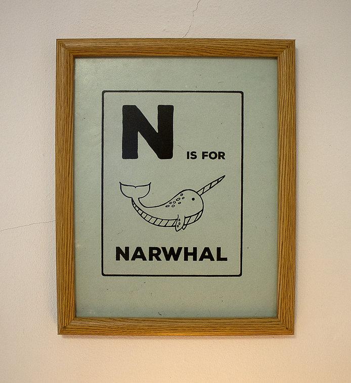 narwhal.jpg