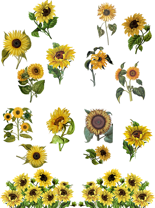 Sunflower Transfer from the Belles and Whistles Line by Dixie Bell