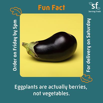 Fun fact - eggplant_2x.png