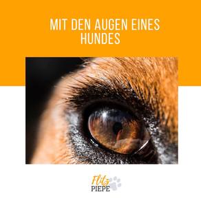 Mit Augen eines Hundes sehen