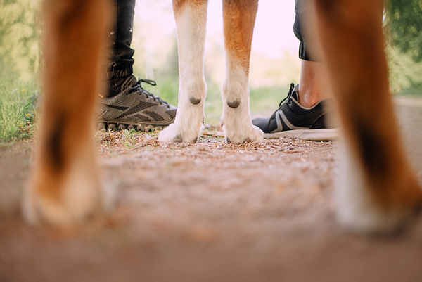 low angle view of dog paws and woman and