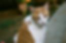 kattenoppasdienst amsterdam